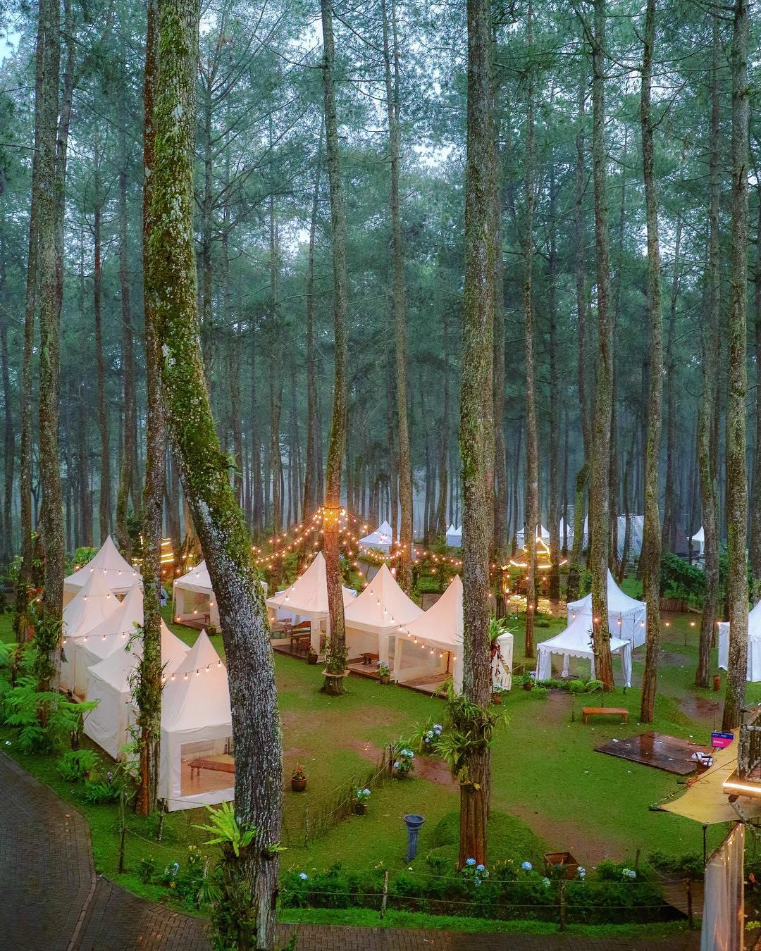 Orchid Forest Cikole Tempat Wisata Baru Di Bandung Barat